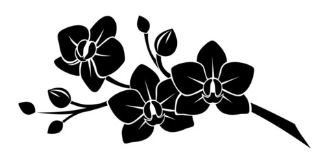 Naklejka Black silhouette of orchid flowers. Vector illustration.