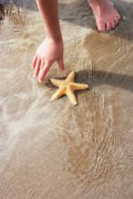 Girl Discovering Starfish On Beach