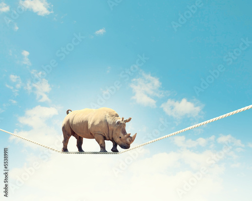 Poster de jardin Rhino Rhino walking on rope