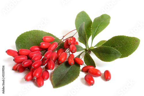 Photo Ripe barberries on branch with green leaves