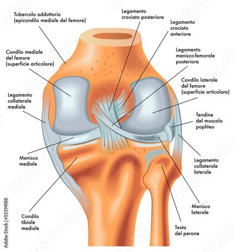 vista posteriore ginocchio destro Wallpaper Mural
