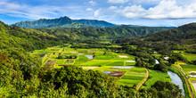 Hanalei Valley Panorama