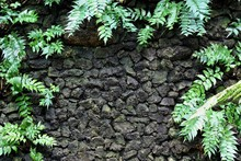 Moss And Fern On Stone Wall