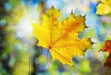 Autumn Leaves On Wet From Rain...