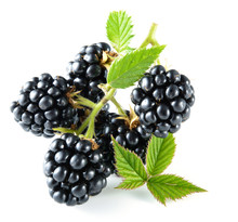 Blackberry With Leaves Isolate...