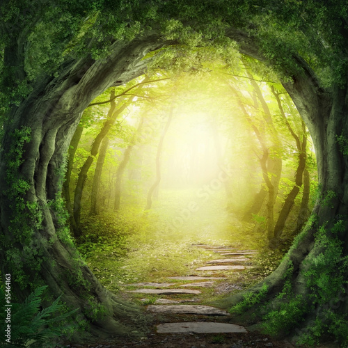 Tuinposter Bestsellers Road in dark forest