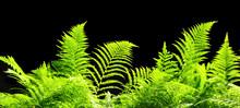 Green Plants Leaves