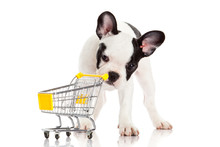French Bulldog With Shopping C...