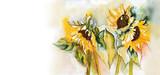 Sunflowers - 55484108