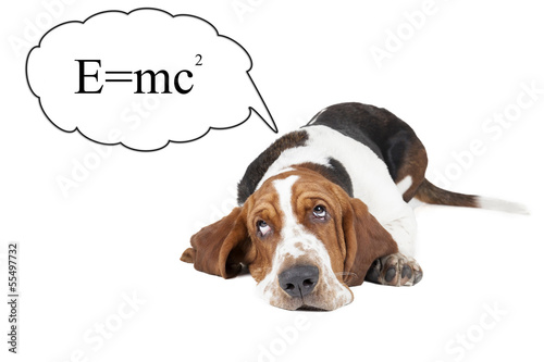 Basset hound thinks about the theory of relativity Wallpaper Mural
