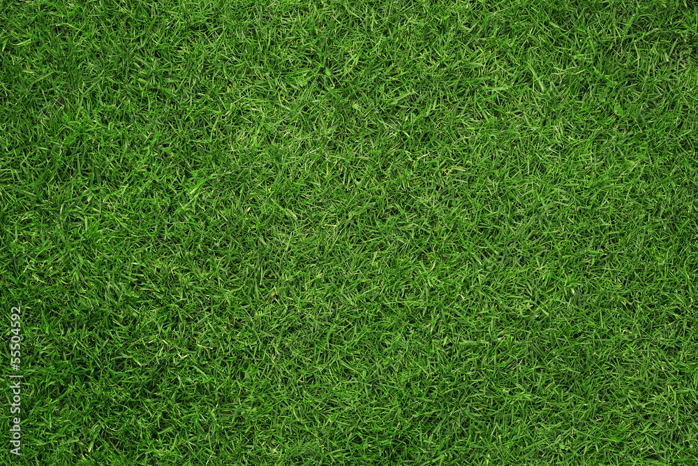 Fototapeta Close up of green grass texture, background with copy space