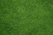Close Up Of Green Grass Texture, Background With Copy Space