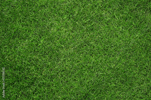 Poster Gras Close up of green grass texture, background with copy space