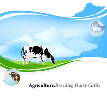 Agriculture.Breeding Dairy Cattle