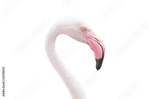 Garden Poster Flamingo Head flamingo isolated on white