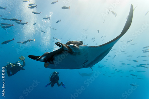 Láminas  Manta and diver on the blue background