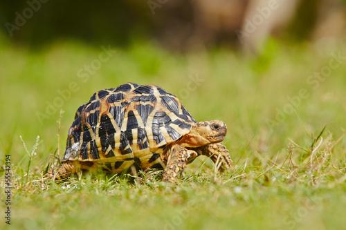 In de dag Schildpad Turtle