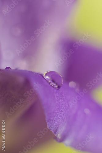 Fotografie, Obraz  Leaf