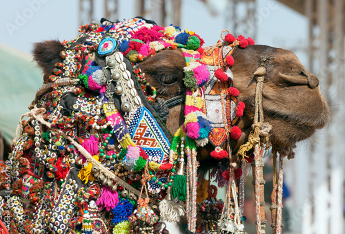 Photo  Decorated camel at the Pushkar fair. Rajasthan, India, Asia