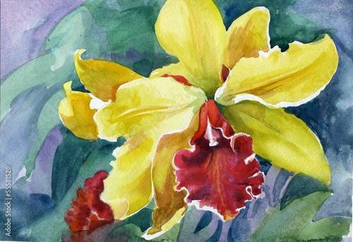 Foto op Canvas Iris Yellow iris