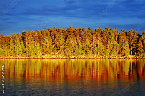 Garden Poster Scandinavia Evening sun on pine forest by a lake