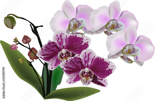 light and dark pink orchids in green leaves