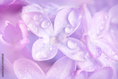 Foto op Plexiglas Lilac floral background with a dewy lilac