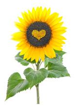 Sunflower Seeds In A Heart Sha...