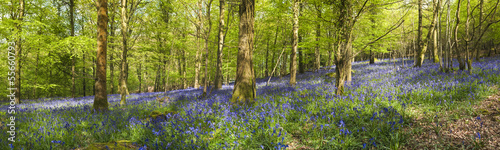 Wall Murals Forest Magical forest and wild bluebell flowers