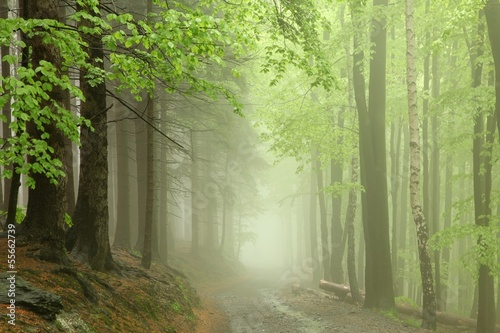 Foto auf Acrylglas Wald im Nebel Path through the forest in the early spring during rainfall