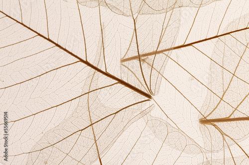Fototapeta Leaves texture obraz na płótnie