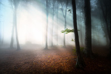 Mystic Fantasy Fog Into The Forest
