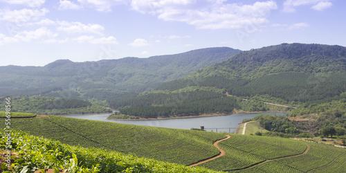 Poster Afrique du Sud Tea plantations in South Africa