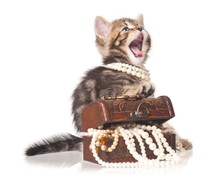 Fashionable Kitten