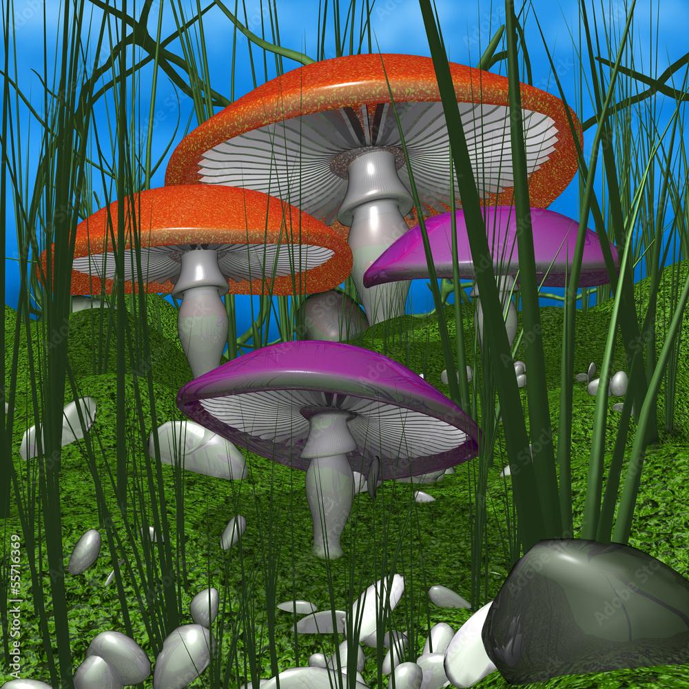 Fototapety, obrazy: Mushrooms