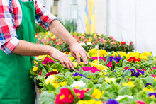 Blumenzucht - Gärtner In Sein...