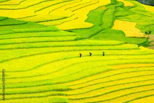 Poster Jaune Three women visit their rice fields in Mu Cang Chai