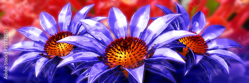 beauty 3d flower panoramic