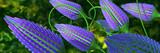 Fototapeta Kwiaty - blue 3d flowers panoramic