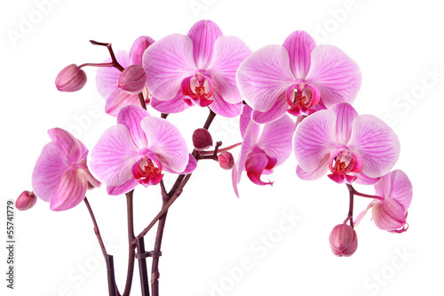 In de dag Orchidee Purple orchids isolated on a white background
