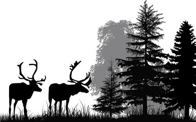 Fototapetadeer silhouettes in forest isolated on white background