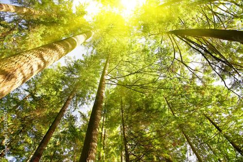 Keuken foto achterwand Bossen Green forest at sunrise