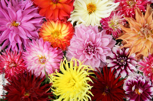 Canvas bouquet  dahlia.