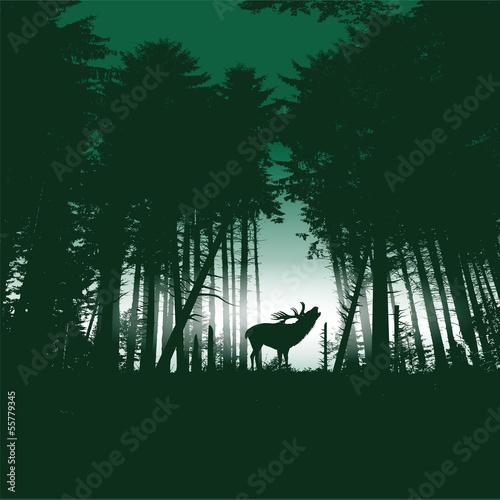 rogacz-w-swierkowym-lesie-przy-noca