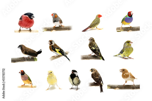 Photo  Group of small birds on the white background