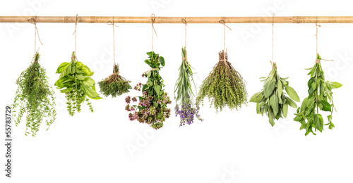 Fototapeta varios fresh herbs isolated on white obraz