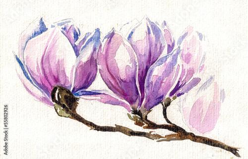 swieze-rozowe-wiosenne-kwiaty-magnolii