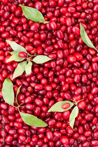 Fotografie, Tablou Background of cornelian cherries