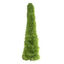 Tall Thuja Tree Isolated