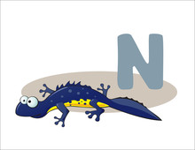 Cartoon Newt And Letter N